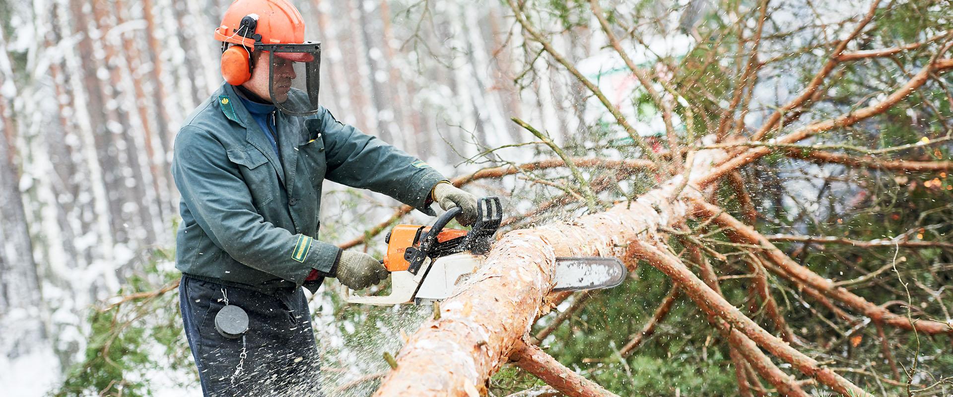 Metsä- ja raivaussahatyöt sekä sähkölinjaraivaukset Lapin läänissä • Tmi Jyri Kemiläinen
